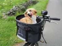 Fahrradkorb für Hunde Test